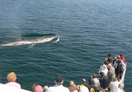 incredib eel spring whale watching on cape cod whales net
