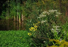 native wetland plants saratoga woods and waterways native abundance along spring run