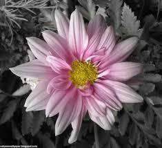 google images flower untitled document