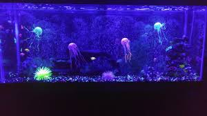 55 gallon aquarium light 55 gallon glo fish tank setup youtube