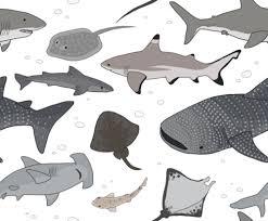 pattern illustration tumblr shark pattern tumblr