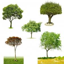 free high quality layered psd trees psd files no