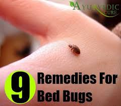 natural bed bug remedies bed bugs herbal remedies natural treatments and cure herbal