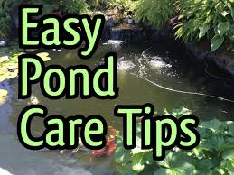 easy fish pond maintenance tips how to clean a pond pump and