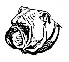 how to draw a bulldog head