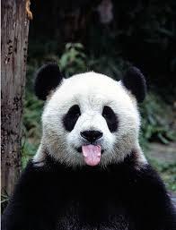 chambre bébé panda le bébé panda pouvez vous choisir le plus mignon archzine fr