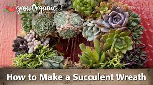 How To Make A Succulent Planter How To Make A Succulent Wreath Youtube