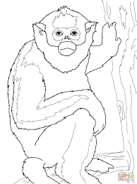 golden monkey coloring page free printable coloring pages