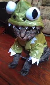 Funny Halloween Costumes Cats 396 Cats Hats Images Animals Funny Animals