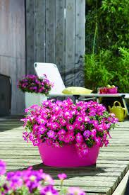 balkon grã npflanzen welche balkonpflanzen für sonnigen balkon wählen