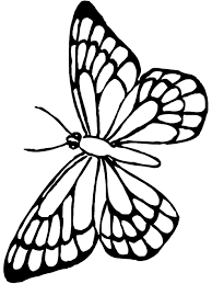 animal butterfly outline printable butterflies to colour and