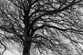 black tree matías ventura