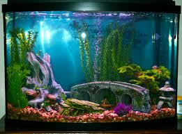 idee deco aquarium home aquarium decoration ideas house plans and ideas pinterest