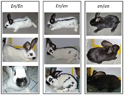 megacolon u0026 rabbits mishmash storage page the curse of the 33