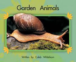 Types Of Garden Snails Literacy 9781420262568 Garden Animals Also On Cd