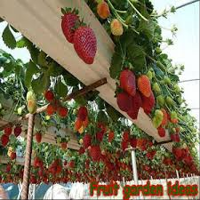 Fruit Garden Ideas Fruit Garden Ideas Android Apps On Play