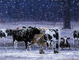 152 best by bonnie mohr images on find cow