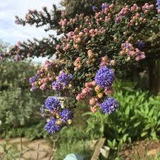 native plants to california the garden u2014 garden for the environment
