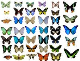 top 10 most beautiful butterflies of the the allmyfaves