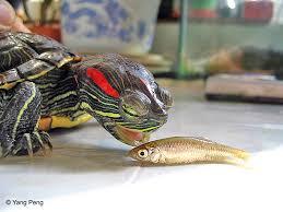 turtle and tortoise screen savers by glolar multimedia