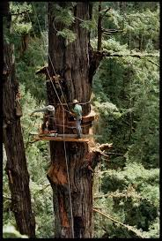 150 Feet In M 188 Best Old Woodworking Photos Images On Pinterest Old Pictures