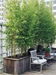 pflanzen als sichtschutz fã r balkon bambus als sichtschutz im garten oder auf dem balkon garten