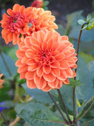 autumn flowers best autumn flowers