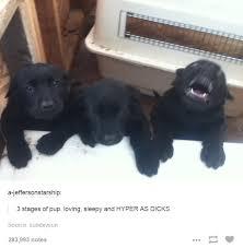 Hyper Dog Meme - hyper as dicks dogs know your meme