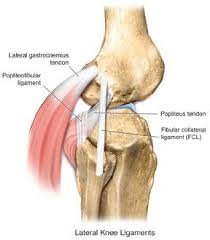 Knees Anatomy Lcl Injury Of The Knee Sports Orthobullets Com