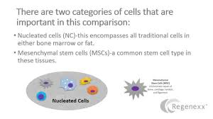 fat stem cells vs bone marrow youtube
