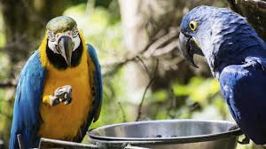 seed only diet is harmful for parrots post magazine south