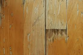 Hardwood Floor Repair Water Damage Hardwood Floor Water Damage Repair Paramount Flooring