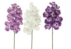 stem flowers 28 vanda stem w 10 flowers 6118 flowers royale inc the
