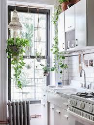 plante de cuisine plante intérieur dans la cuisine inspiration déco en photos kitchens