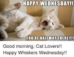 Good Morning Cat Meme - happy happy wednesday youre halfway there good morning cat
