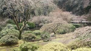 portland japanese garden winter arrival timelapse youtube