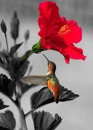 Hummingbird Flowers Candy Heart Breath Taking Photos Pinterest Hummingbird Bird