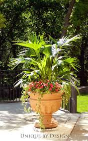 best 25 elephant ear plant ideas on pinterest elephant plant
