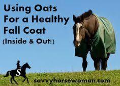 camelina oil ever heard of it equine nutrition u0026 feeding