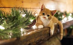 animals mammals cat decorations christmas ornaments wallpapers