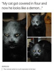 Cat Memes Tumblr - 25 best memes about cats cats memes