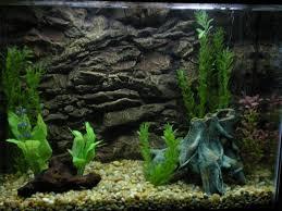 cuisine planted freshwater aquarium setup aquarium creative