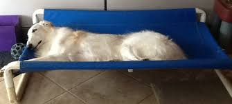 Elevated Dog Beds For Large Dogs Large Pvc Dog Bed Rover Company