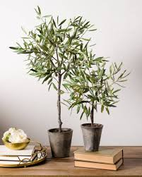 campania olive topiary balsam hill