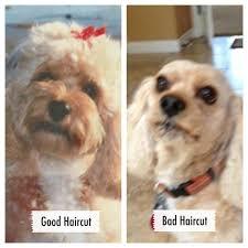 good haircut bad haircut bad hair cuts pinterest funny things