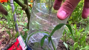 decoration avec des pots en terre cuite arroser les plantes jardinage youtube