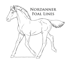 nordanner official foal lines png by cloudrunner64 on deviantart