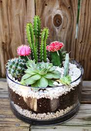 diy projects simple cactus garden ideas home design and interior