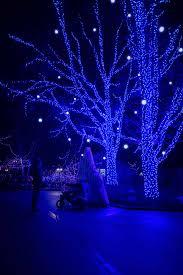 christmas lights at the zoo indianapolis beautiful blues at the indianapolis zoo christmas festivities