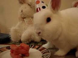 rabbit birthday queso s bunny birthday party